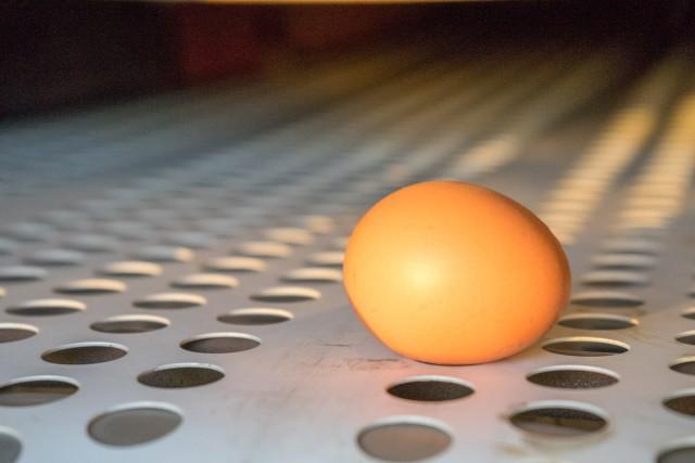 Ei auf dem Eierband